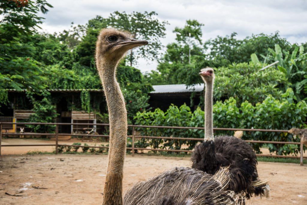 Jono Lester explores Khao Yai National Park, Thailand